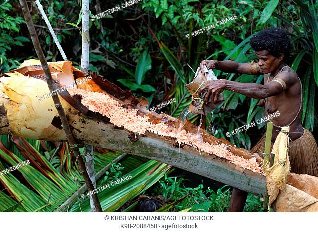 Kombai woman watering the Sago chips to extract Sago flour, Papua, Indonesia, Southeast Asia