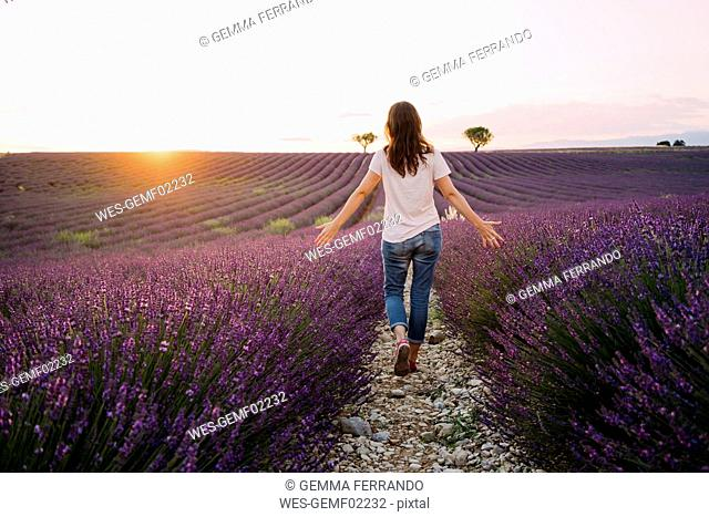 France, Valensole, back view of woman walking between blossoms of lavender field at sunset