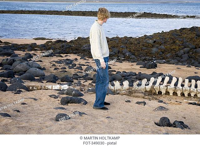 Young man standing on beach next to a whale bone, Iceland