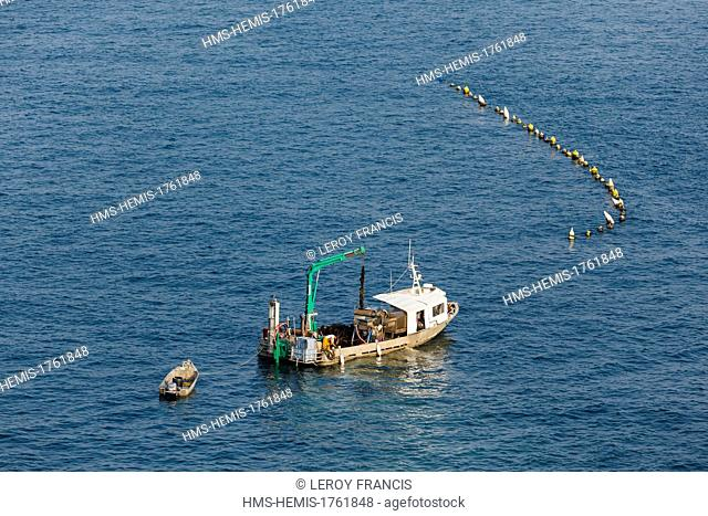 France, Vendee, La Faute-sur-Mer, mussel farm boat collecting mussel on a rope (aerial view)