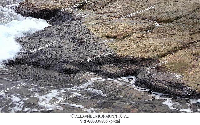 The surf waves splash on the coastal stones covered with marine overgrowths (supralythoral)
