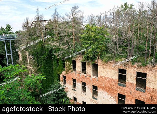 "10 July 2020, Brandenburg, Beelitz: On the area of the former lung sanatoriums in Beelitz-Heilstätten is the 320-metre-long treetop path """"Tree and Time"""""