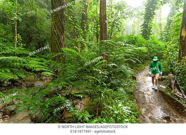 USA, Hawaii, Oahu  Woman walking on the Manoa Falls trail in rainstorm
