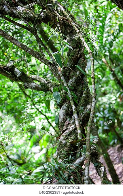Guatemala, Alta Verapaz, Rain Forest