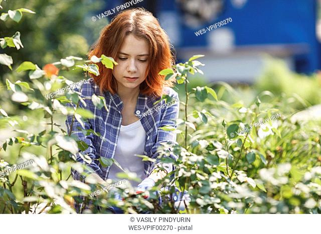 Young woman pruning roses