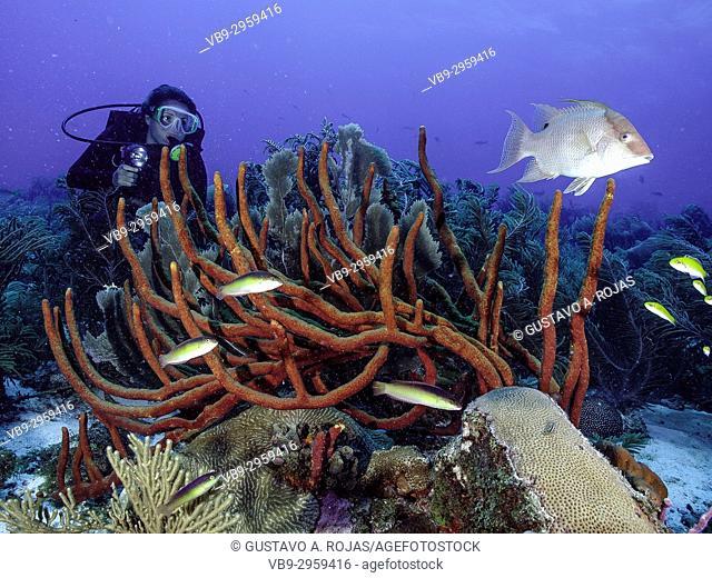 Caribbean Sea, Los Roques Venezuela, woman Scuba-Diver underwater photographer Tour, , Underwater, Venezuela, Sponge