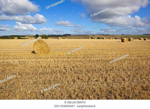 a golden stubble field in the yorkshire wolds england with round bales set amongst scenic agricultural farmland under a blue cloudy sky