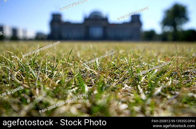 12 August 2020, Berlin: Dried up meadow can be seen in front of the Reichstag building. Photo: Britta Pedersen/dpa-Zentralbild/dpa