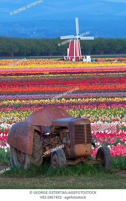 Tulip field with tractor, Wooden Shoe Bulb Co. , Clackamas County, Oregon