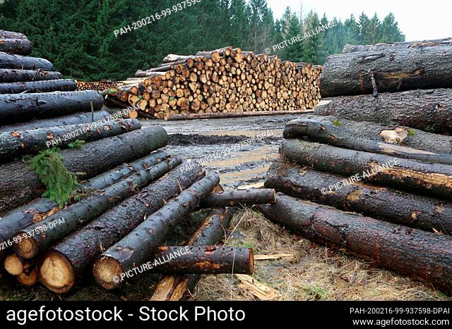 """16 February 2020, Saxony-Anhalt, Wernigerode: A lumberyard in Three-Annen-Hohne. Stormtorm """"""""Sabine"""""""" has caused great damage in the Harz forests"""