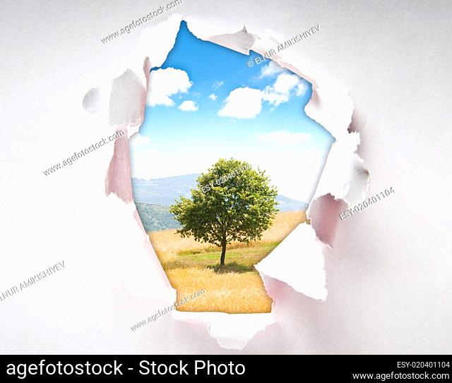 Lonely tree through hole in paper