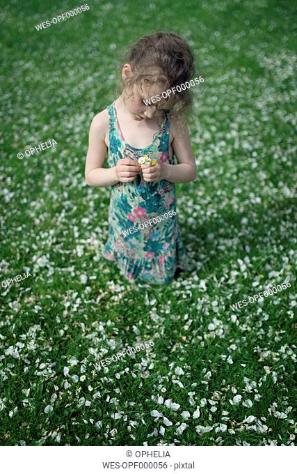 Little girl kneeling on meadow with scattered apple blossoms holding daisies in her hands