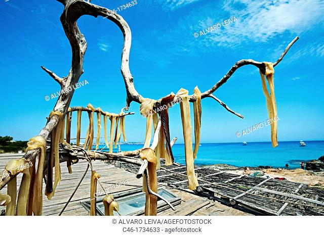 Fish hanged to dry at sun in a tree called Sabina, Es Caló of San Agustín, Formentera, Balearic Islands, Spain