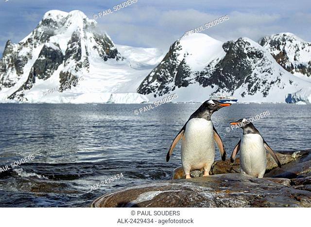 Antarctica, Petermann Island, Gentoo Penguins (Pygoscelis papua) standing on rocky shoreline beneath mountains near Lemaire Channel
