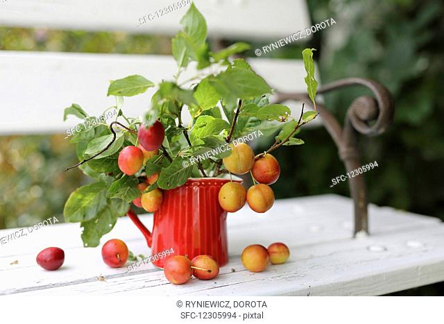 Twigs with plums in a red jug