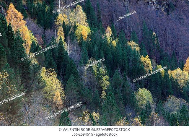 Forested landscape in the valley of Ordesa. Ordesa National Park. Huesca