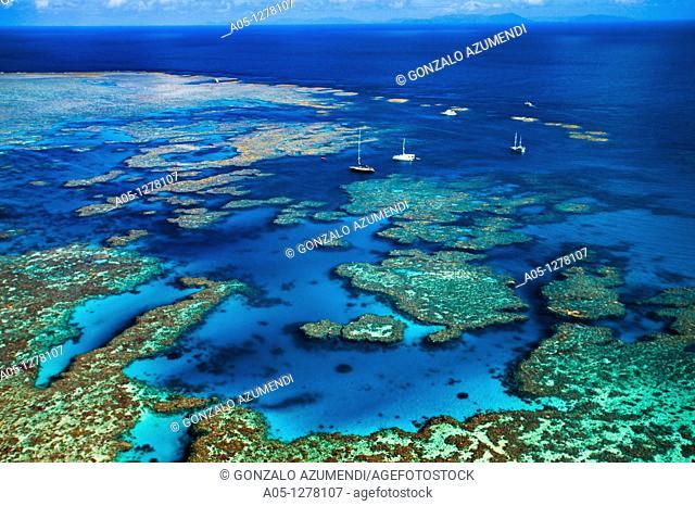 Bait Reef, Great Barrier Reef, Queensland, Australia (August, 2000)