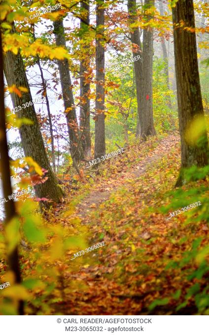 Soft-focus depiction of a hiking path through autumn's forest, Pennsylvania, USA