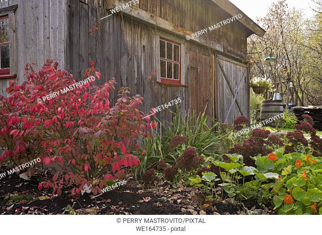 Old wooden barn in a residential backyard garden in autumn, Quebec, Canada