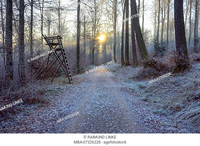 Forest path and hunting blind in winter with sun, Weibersbrunn, Spessart, Bavaria, Germany