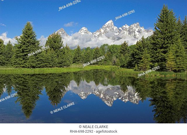 The Cathedral Group of Mount Teewinot, Mount Owen and Grand Teton reflected in the Beaver Pond, Schwabacher's Landing, Grand Teton National Park, Wyoming