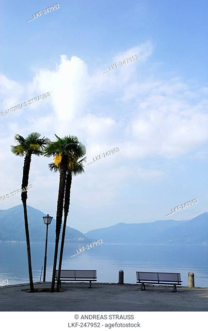 Two benches under palm trees with view towards lake Maggiore, Ascona, lake Maggiore, Lago Maggiore, Ticino, Switzerland