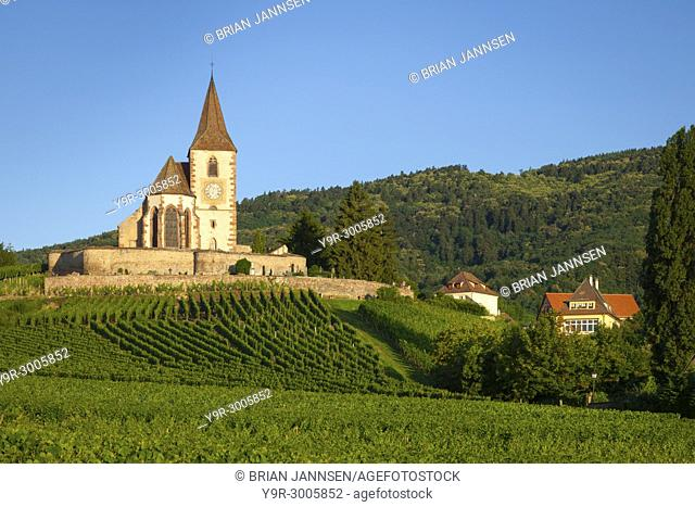 Dawn at the 15th century church of St. Jacques surrounded by the vineyards of Grand Cru in Hunawihr, Alsace France