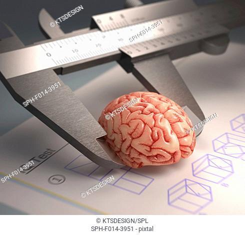 Calliper ruler measuring human brain, illustration
