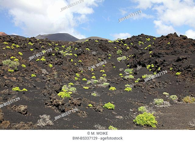 lava field at Punta de Fuencaliente, Canary Islands, La Palma, Fulicaliente