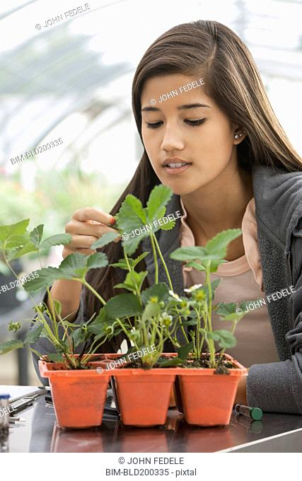 Chinese student working in greenhouse