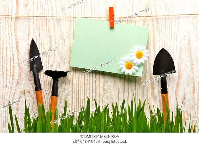 Gardening tools, fresh green grass and blank sheet on a wooden background. Concept of spring gardening