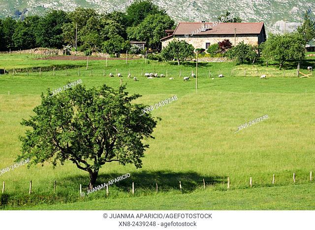Animals grazing in Farmhouse in Durango, Biscay, Basque Country, Euskadi, Euskal Herria, Spain, Europe