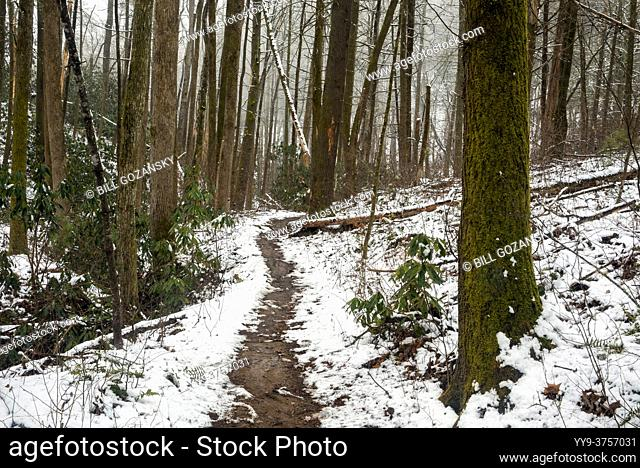 Snowy forest trail - Sycamore Cove Trail - Pisgah National Forest, Brevard, North Carolina, USA