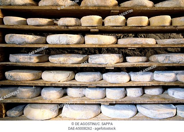 Tome of seasoning of raw milk, farm Ivano Challier, Balboutet fraction of Usseaux, Orsiera-Rocciavre National Park, Piedmont, Italy