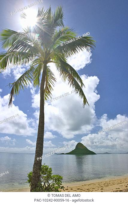 Hawaii, Oahu, Koloa, Chinaman's Hat seen from a sandy beach, palm tree in foreground