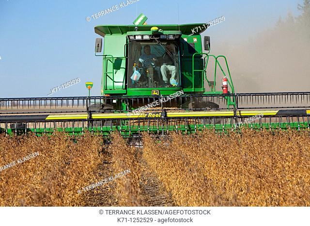 Soybean harvest on the Froese farm near Winkler, Manitoba  Canada