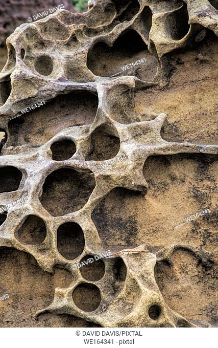 Honeycomb weathering patterns in the limestone within the Yehliu Geological Park known to geologists as the Yehliu Promontory