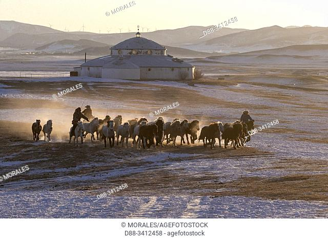 China, Inner Mongolia, Hebei Province, Zhangjiakou, Bashang Grassland, group of horses in the cold