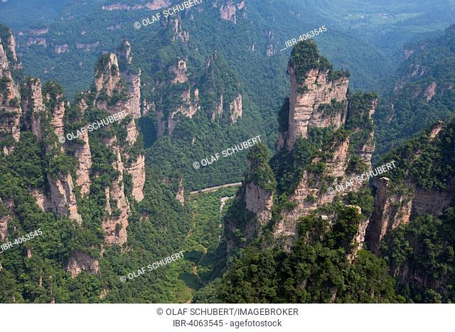 Sandstone pillars in the mountains of Zhangjiajie, Wulingyuan Scenic and Historic Interest Area, Hunan Province, China