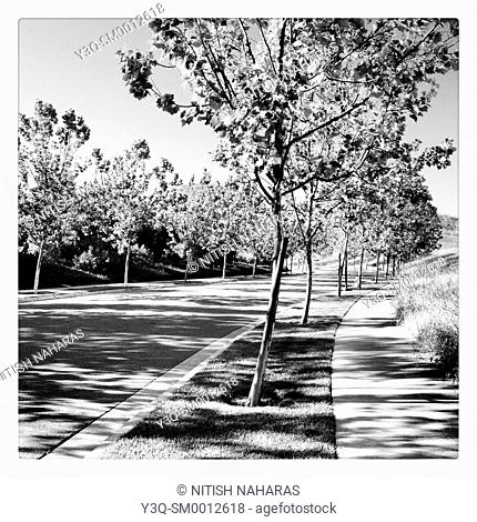 Shadows come in waves - A curbside afternoon in San Ramon, California, USA