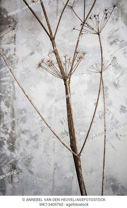 plant branches with concrete wall background texture close-up