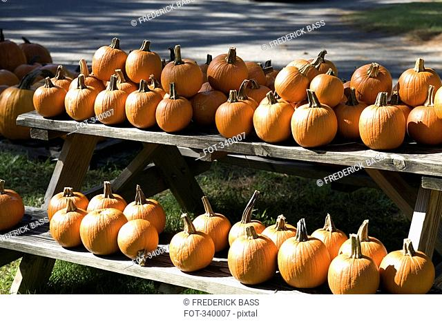 Pumpkins arranged on wooden picnic table
