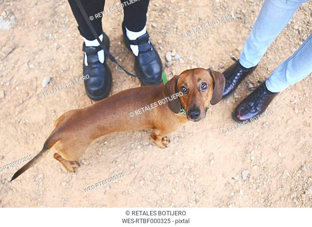 Dachshund with owners outdoors