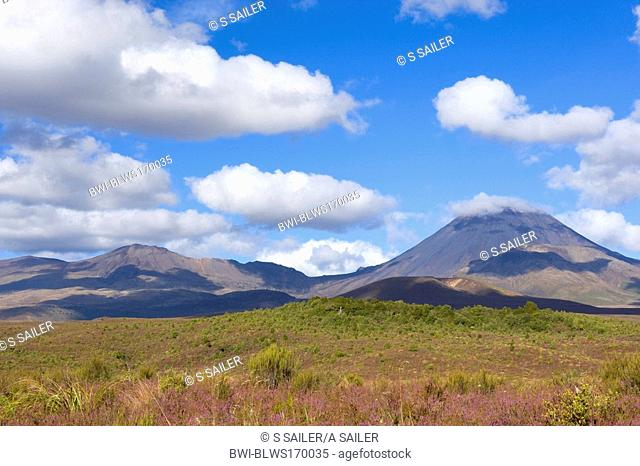 volcanoes Mount Tongariro on the left and perfectly cone-shaped Mount Ngauruhoe with blooming heather in autumn, New Zealand, Northern Island