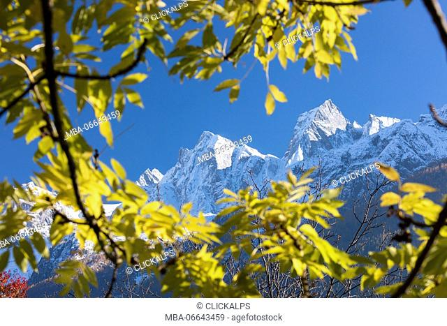 The snowy Peak Badile and Cengalo framed by colorful trees Soglio Bregaglia Valley canton of Graubünden Switzerland Europe
