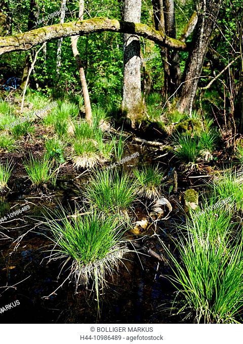 Black alders wood Chlöpfimoos in the canton of Berne