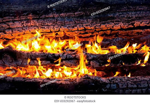 Burning logs in the bonfire. Close up
