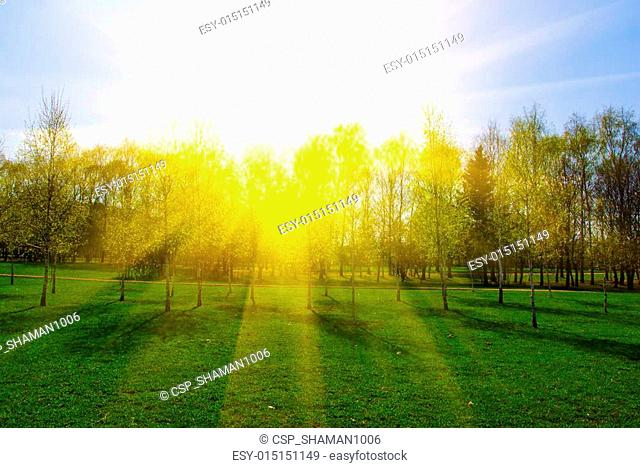 spring landscape with trees at sunset