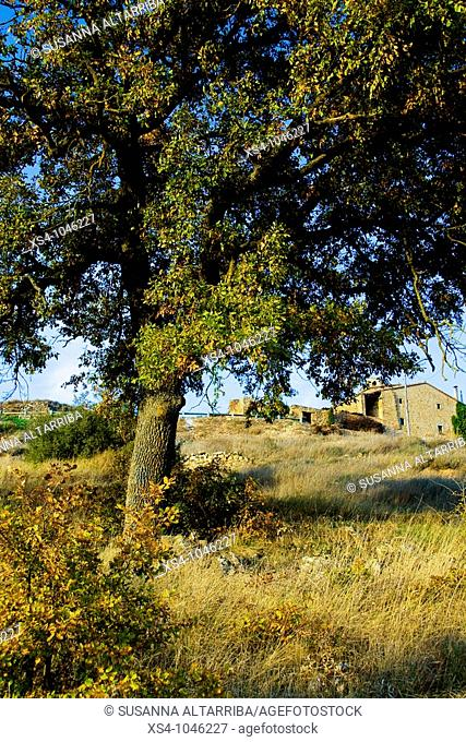 Pinós, outside of small medieval town with old oak tree in the foreground. Lleida, Solsonés, Catalonia, Spain, Europe. November 2009