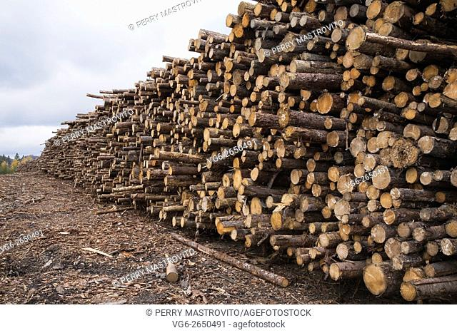 Large pile of freshly cut timber logs at a lumber mill, Quebec, Canada